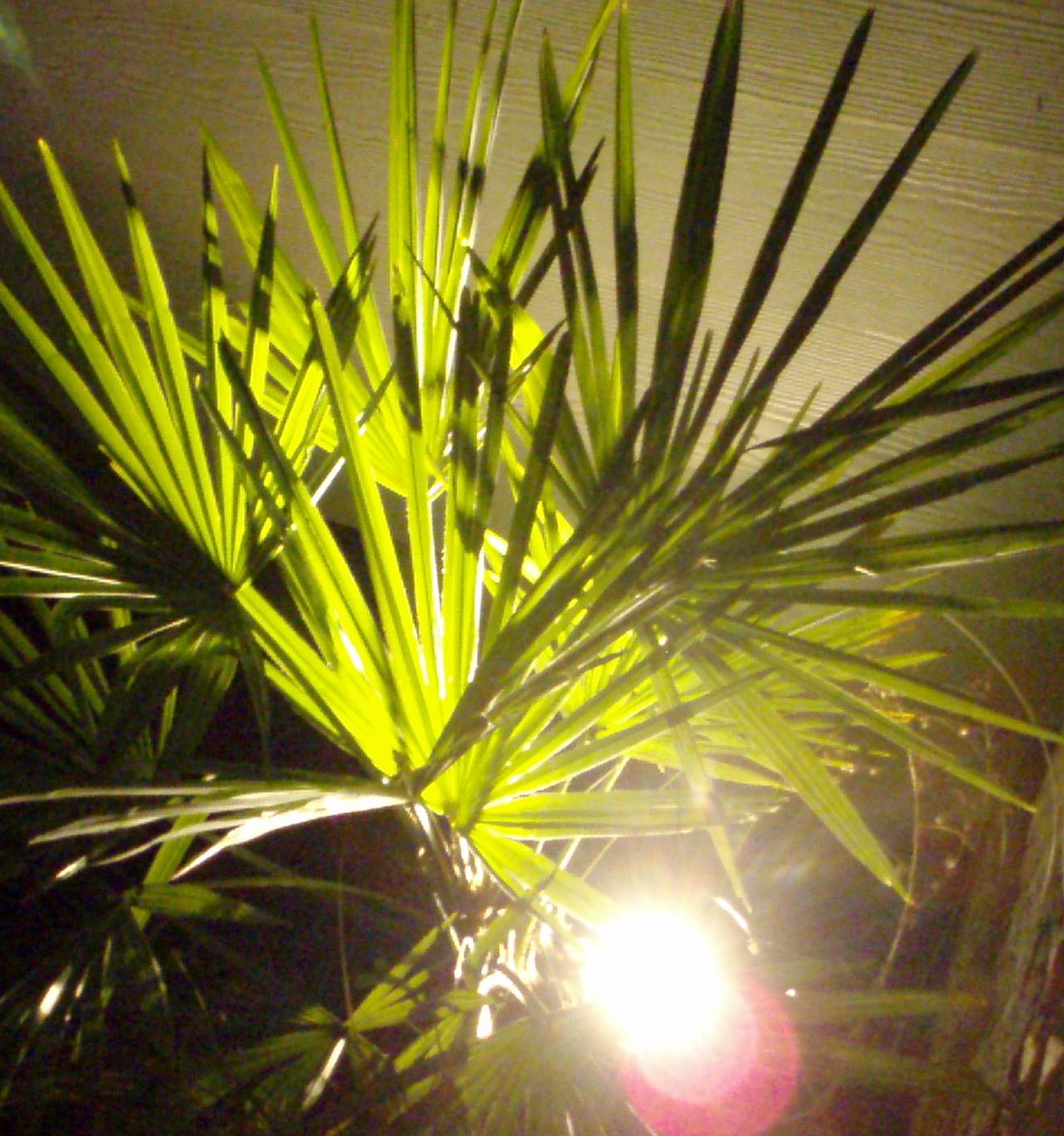 eugene oregon landscape lighting