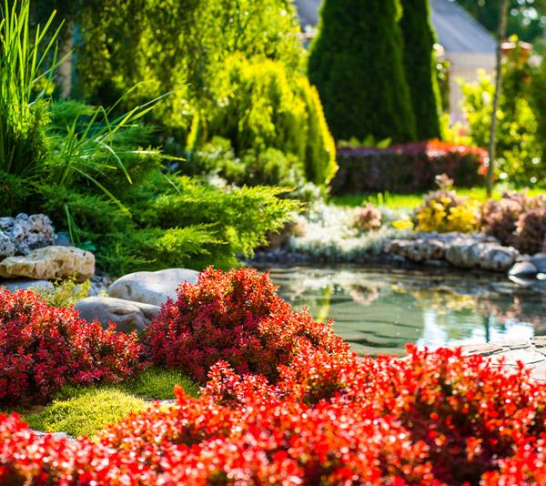 Eugene landscape renovations